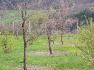 Truffle Farming