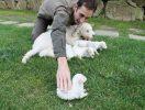 Cuccioli – Puppies_4