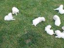 Cuccioli – Puppies_7