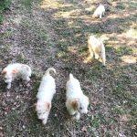Lea truffle dog_2